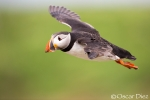 Gallery: Seabirds in the North of England and Southern Scotland