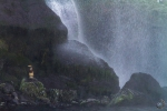 Cormorant under the Waterfall